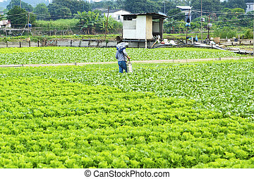 Cultivated land and farmer spraying