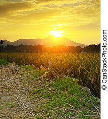 granja, dorado, encima, ocaso, campo