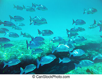 school of fish underwater Similan islands Thailand