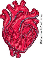 Heart - Medical Heart