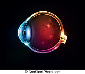 Beautiful colorful human eye on a dark background.