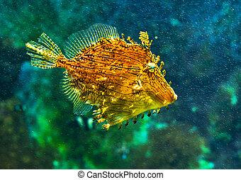sea fish - coral fish