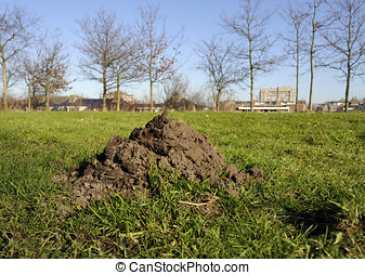 Molehill on green gras - A molehill on green gras at...