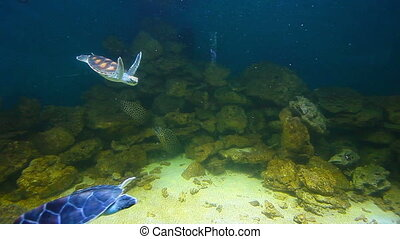 sea turtles and sharks