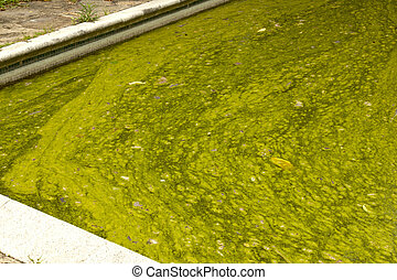Close Up Algae Infested Green Slimy Swimming Pool - close up...