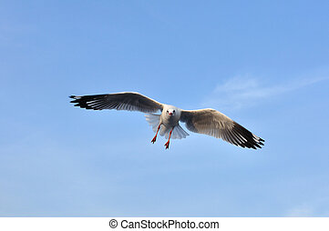 Seagull flying in blue sky.