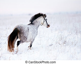 Gray horse - Gray pony in the field in the winter The mare...