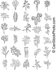 Fresh herbs - vector collection of fresh herbs in line art