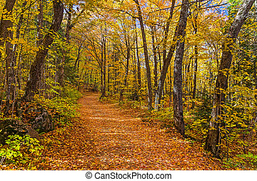Fall in the Michigan Woods - Fall leaves adorn a country...