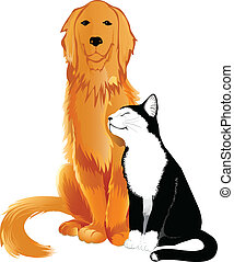 Cat and dog - Friendly Golden retriever and black-n-white...