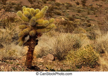 Lone Cactus Tree in Nelson, Nevada USA With Copy Space