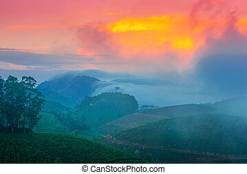 beautiful landscape of the tea plantations with fog in...