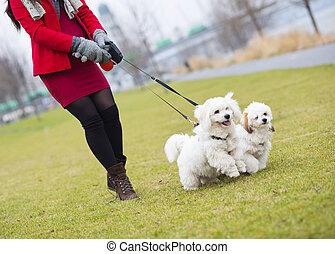 Winter portrait of pregnant woman walking dogs - Winter...