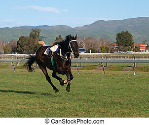Riderless horse on the racecourse All hooves clear of the...
