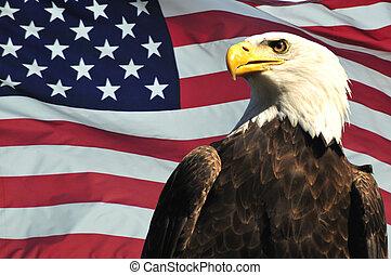 calvo, águia, EUA, bandeira