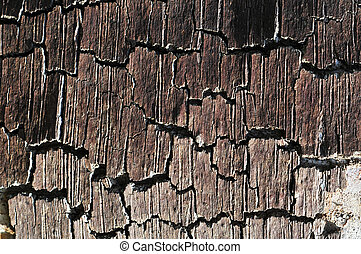 Tree trunk bark with texture and cracking