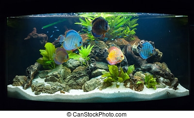 Aquarium fishes in artificial isotope