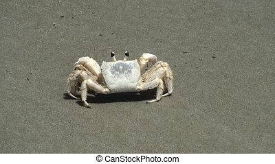 Making a crab on the beach move