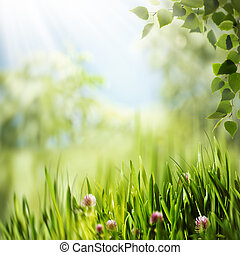 Beauty summer day in the forest, abstract natural backgrounds for your design