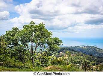 view from the mountain in Samui island