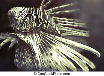 Illustration made with a digital tablet scorpion fish...