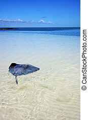 costline breed fish in the blue lagoon relax of isla contoy...