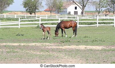 foal and horse on farm