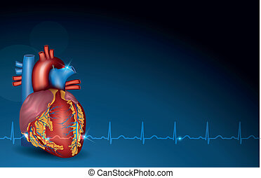 Human heart and blue background - Colorful human heart and...