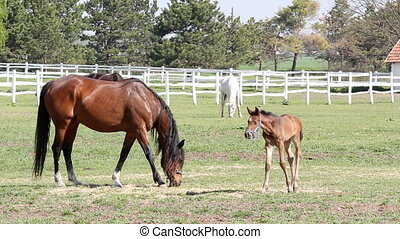 horses and foal on farm