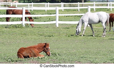 horses in corral