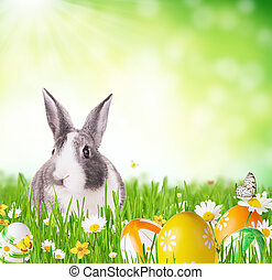 Easter rabbit in grass - Cute rabbit in grass with coloured...