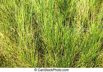 wild bushes