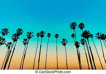 Reihen, baum, Sonnenuntergang,  santa, kalifornien, Handfläche,  barbara