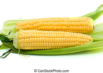 Pair of ripe corn ears isolated on the white background