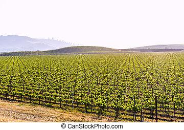 California vineyard field in US