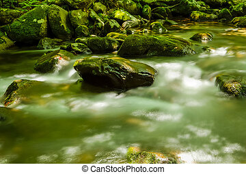 River through the Forest and Mossy Boulders