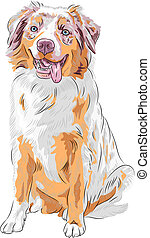 vector dog Red Australian Shepherd breed - dog Red...