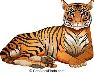 A tiger - Illustration of a tiger on a white background