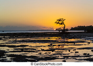 Mangroves - Lonely Mangrove tree in Florida coast