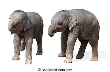 baby elephant, isolated