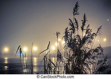 reeds on the lake in night fog