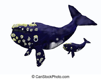 Mother whale