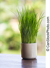 Wheatgrass growing in a white vase decorated tableware
