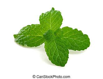 Mint leaves