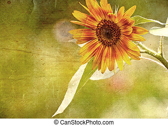 Grunge textured sunflower - buon natale, tree, italian,...