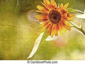 Grunge textured sunflower. - buon natale, tree, italian,...