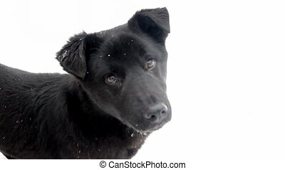 puppy on a white background - dog on a white background