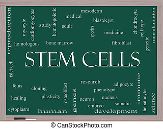 Stem Cells Word Cloud Concept on a Blackboard with great...