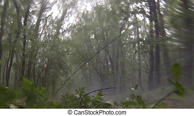Rain and hail in the forest. - Rain and hail in the...