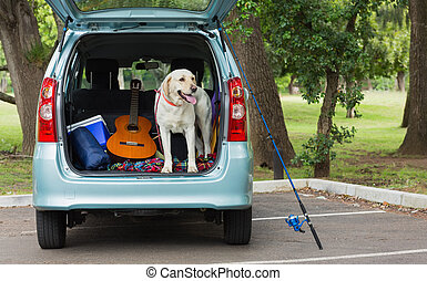 Domestic dog in car trunk - Domestic dog standing in the car...
